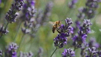 Ízesített méz készítése